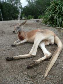 Lounging roo