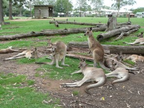 Heaps of roos!