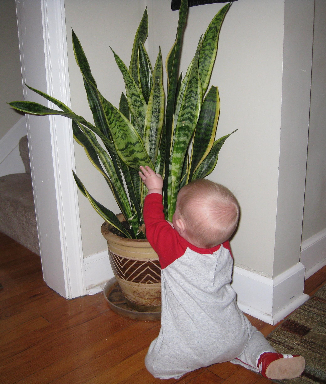 poor-plant