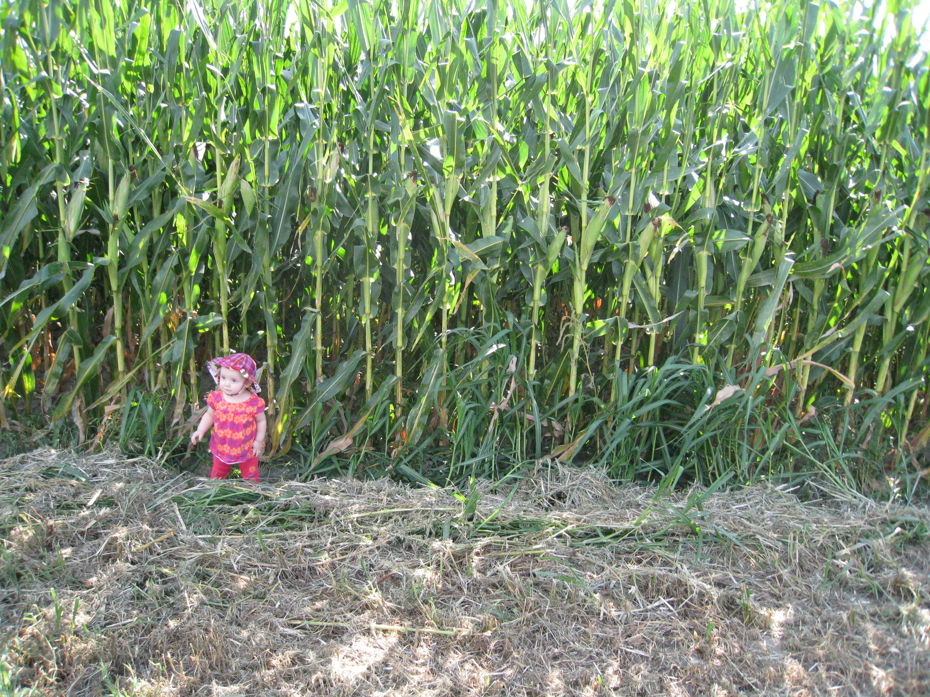 how kivrin measures up to the corn
