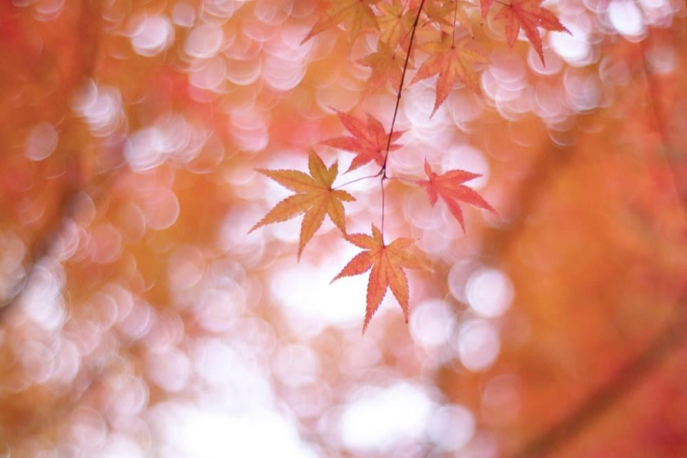 「紅葉」「紅葉を見に行く」って英語でなんて言う?