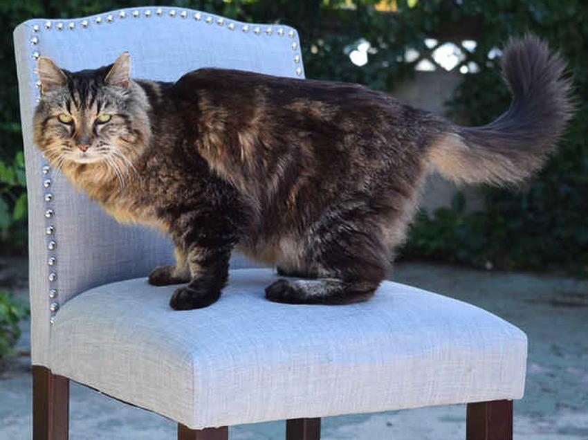 【貓界耆英】長命貓再破世界紀錄 | Kiwidom Cat Blog