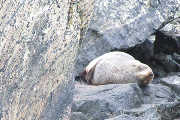 foca milford