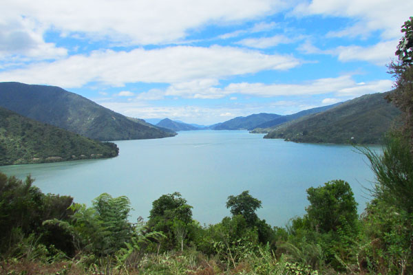 picton a nelson