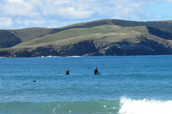 surf curio bay