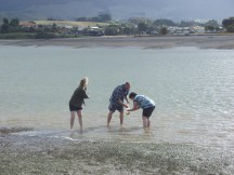 Going clam hunting in Raglan harbour or pipi's as we call them
