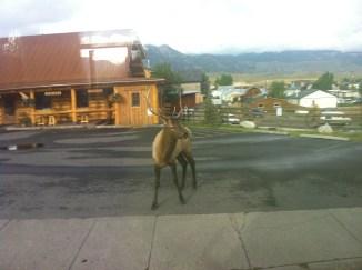 Elk street walking