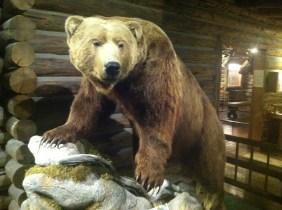 Stuffed Grizzly Bear