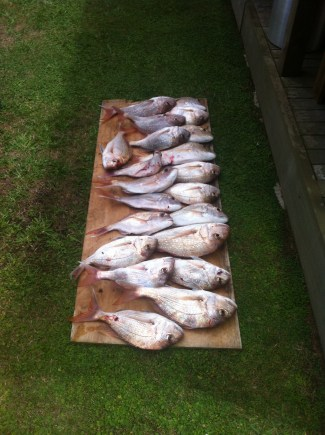 21 snapper caught