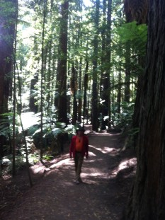Amongst the Redwoods