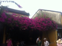 Flowers in Hoi An