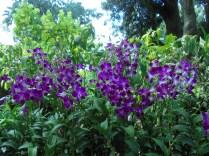 et le jardin d'orchidées