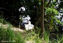 birds-goose