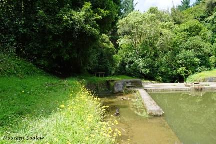 birch-pool2