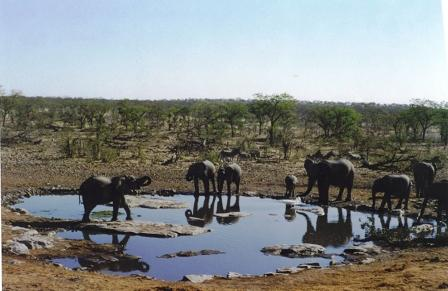 web-namibia-elephants-copy