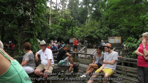 waiting for orangutans to appear