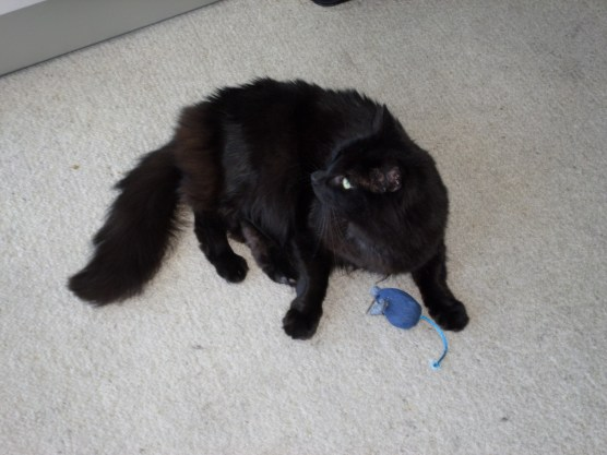Ok, I'll play with a catnip mouse briefly!