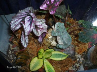 Terrarium 2016 - View from above