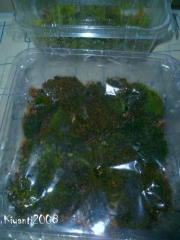 gowing-my-own-moss-october-24-2016