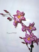 Orchid Zelglossoda Calico Gem 'Green Valley'