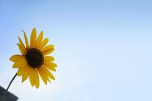 「瞑想」は、自分を整えてくれるスペシャルなスキル。自分に合った瞑想法を見つけよう。
