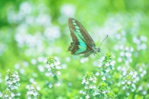 蝶 緑 バタフライ効果