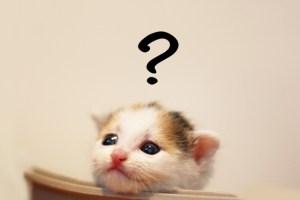 ネコ 悩む なぜ 疑問