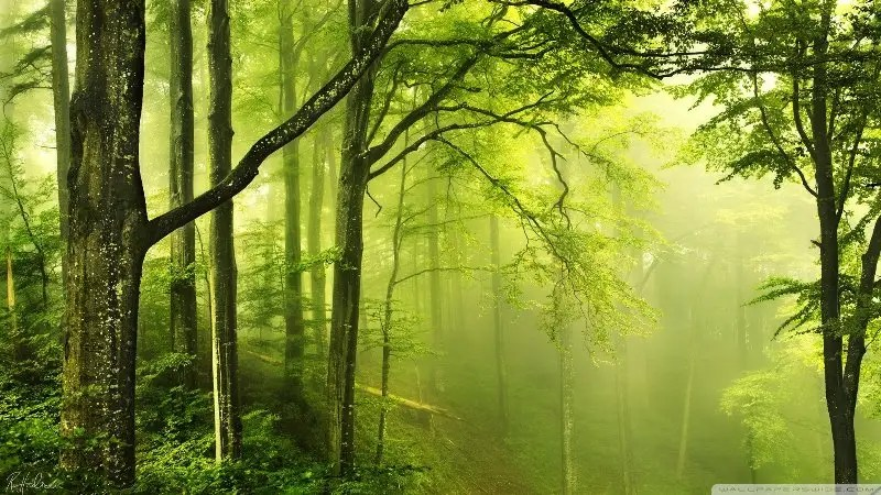 As i mentioned in the first feature, there is a structured s. International Day Of Forests 2021 Reafforestation Is The Key To Recovery Well Being