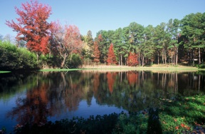 """The pond at Dick Bell's """"Water Garden"""""""
