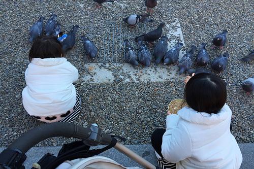 鳩の餌やり