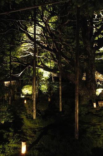 宝泉院庭園ライトアップ2