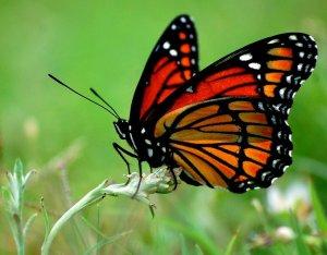говно бабочки
