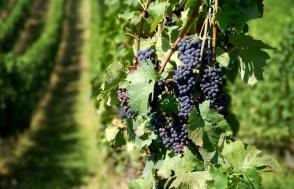K&K Superblend Fertilizer for Organic Crops