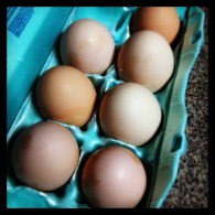 Some of our first eggs