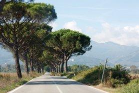 Pinienallee nahe Lucca