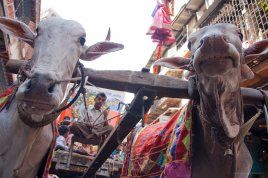 Umzug anlasslich des Neujahrsfest, Mumbai