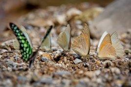 Schmetterlinge warmen sich an einem Bach in der Sonne
