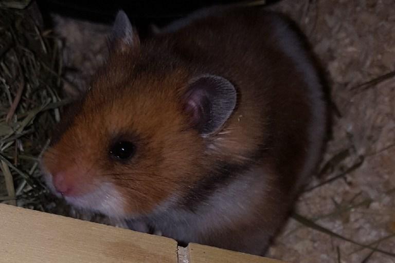 Was tut man als Hamster nicht alles?