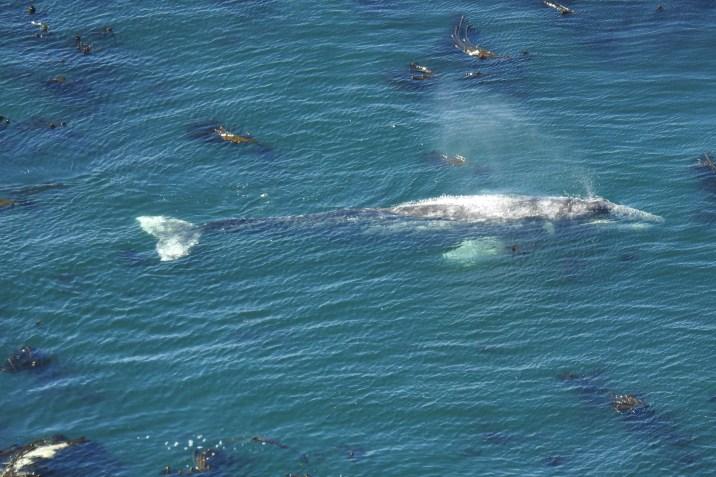 drone_whale