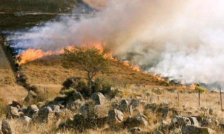 EMPOWERMENT TIPS FOR WILDFIRE SEASON