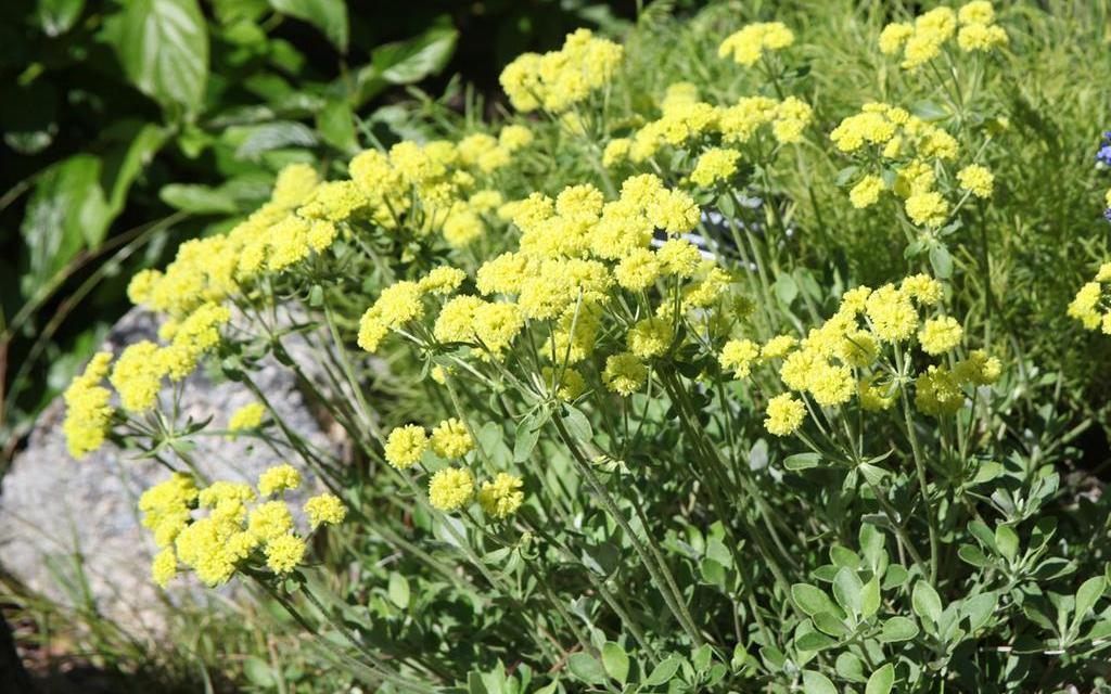 Plants native to the Klamath Basin will be offered in a May 22 sale at the Klamath County Museum