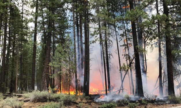 Bootleg Fire nears 300,000 acres at 22% containment (Morning Update)