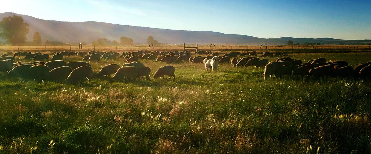 Organic Farm in Malin Oregon