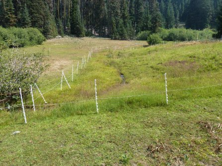 A spring on the Siskiyou Crest in the Beaver Creek drainage, fenced to exclude livestock in a grazing allotment. Note how the vegetation is much taller and healthier inside the cattle exclusion.
