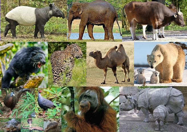 Fauna of Asia
