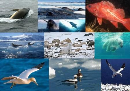 Fauna - Arctic Ocean