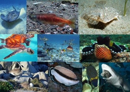 Fauna of the Pacific Ocean