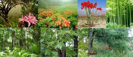 Flora of Asia