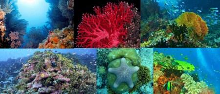 Flora of the Indian Ocean