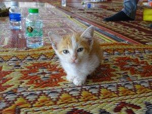 Hier noch ein Bild einer Baby-Katze im Tempel, da ich gehört habe, dass Katzenbilder im Internet immer gut ankommen